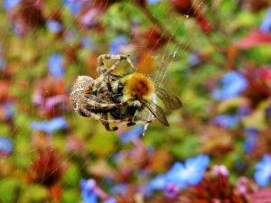 pexels sevenstorm juhaszimrus 597808 300x225 - Information och tillgångar med insekter som hobby